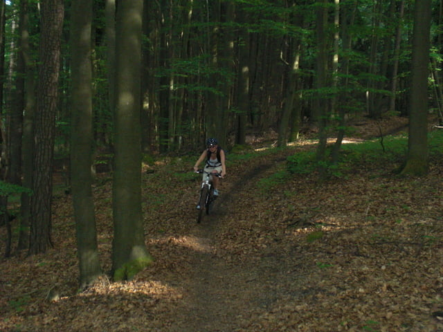Die 13 Top-Mountainbike-Touren rund um Pottenstein