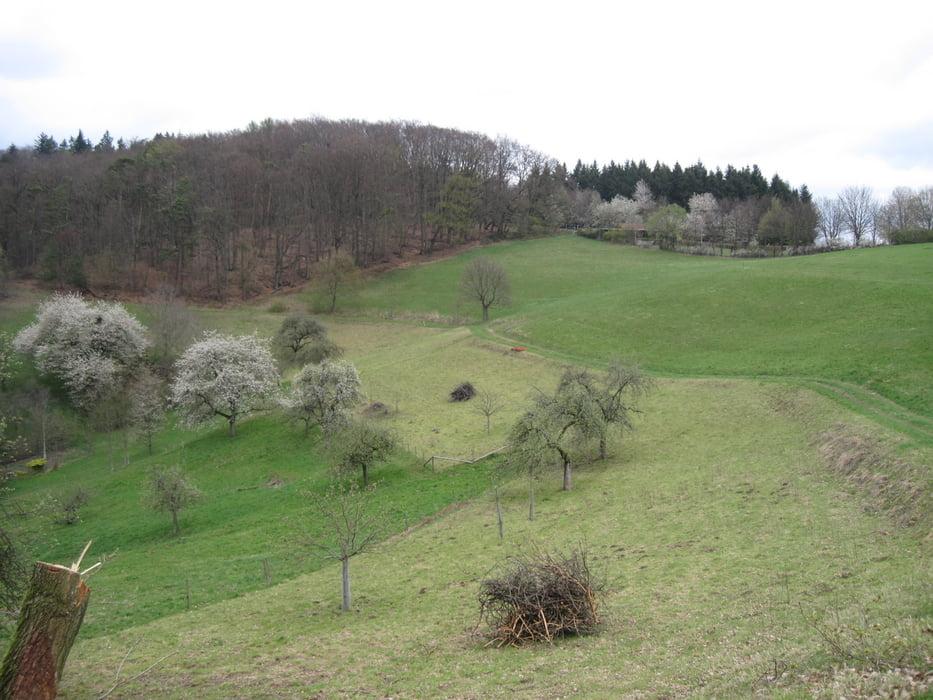 Single wandern odenwald