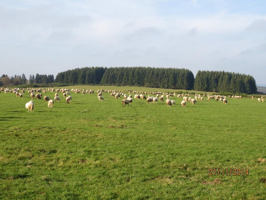 Wandern Ber Die Dreiborner Hochflche Nordeifel Tour