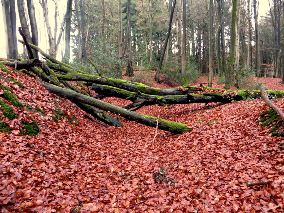 Wandern: Vom Rusticus durch den Zauberwald (Tour 112144)
