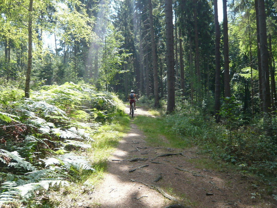 MTB Trails around Rheinbach