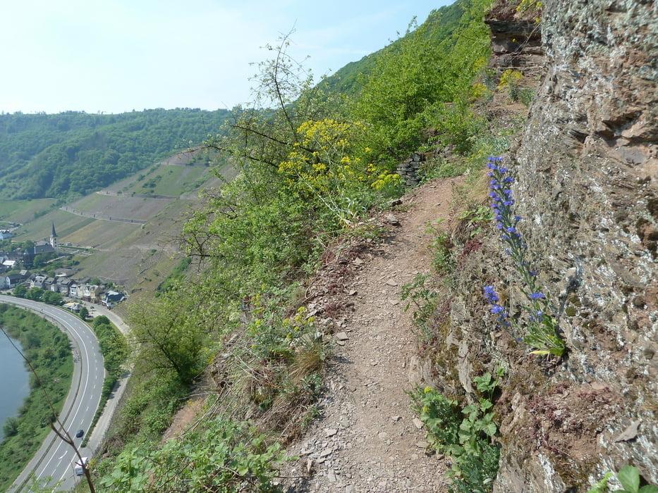 Klettersteig Cochem : Mosel cochem reichsburg beilstein schwarze madonna